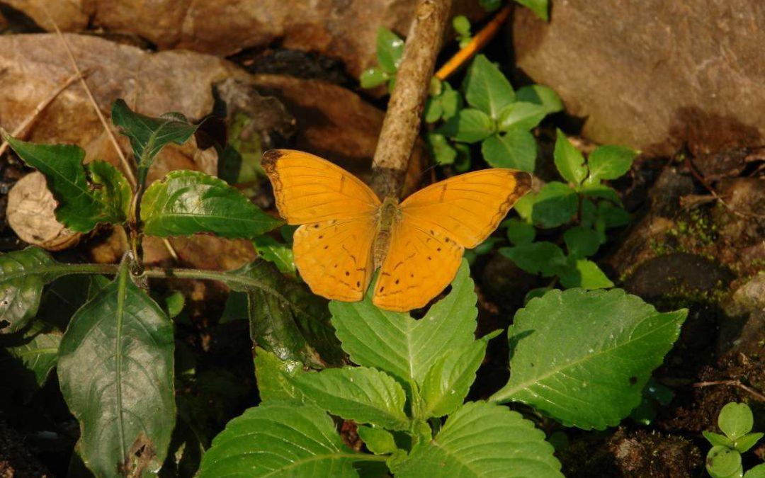 Butterflies, Moths & Insects